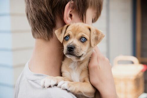 bambino con cagnolino in braccio