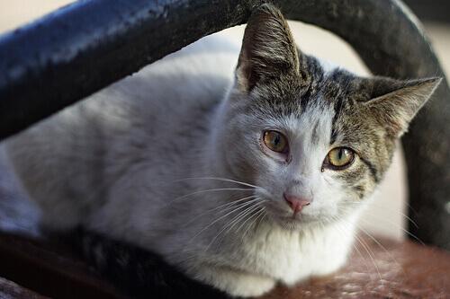 gatto malato di cancro