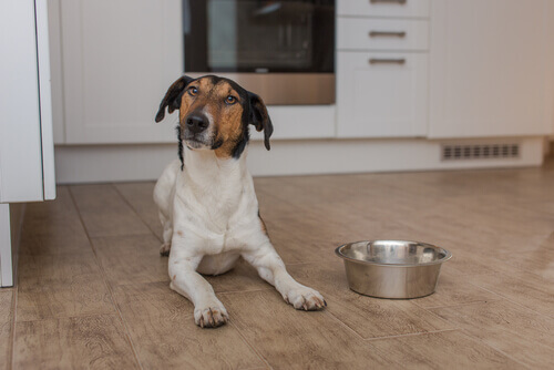 cane seduto sul pavimento con ciotola