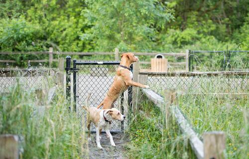 cani nel giardino