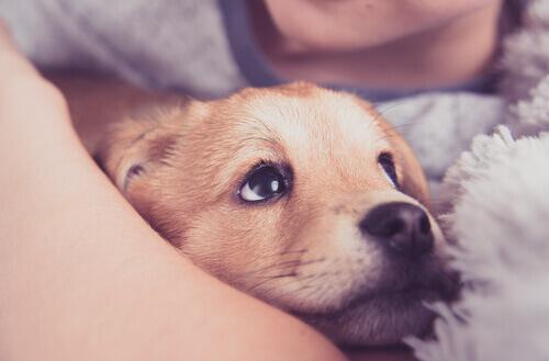cucciolo che viene abbracciato