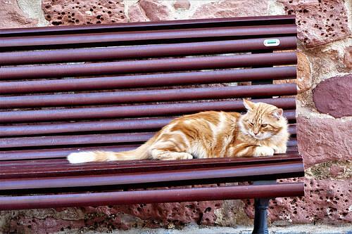 In che modo si possono aiutare i gatti randagi?