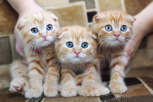 Allergia ai gatti: cause, sintomi e prevenzione