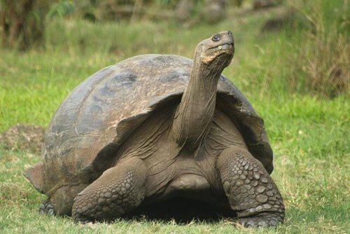 Gli animali più longevi al mondo: scopriteli!