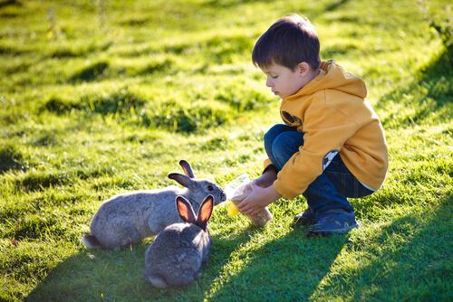 bambino che gioca con due conigli in giardino
