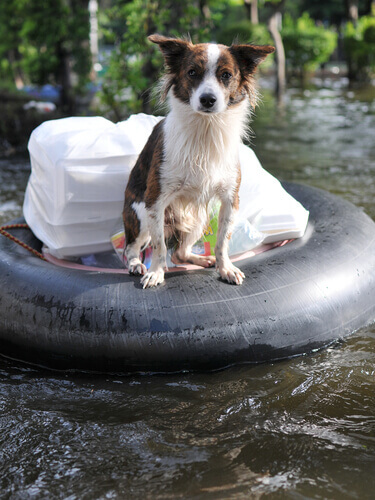 cagnolino galleggia su pneumatico