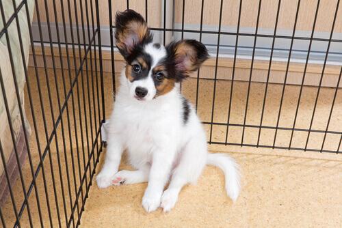 cagnolino in una gabbia