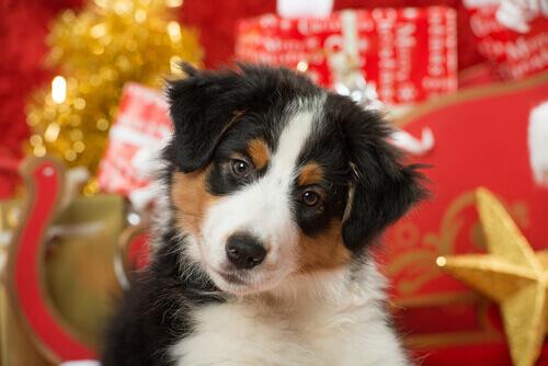 Animali domestici e Natale: 5 consigli per prendersene cura