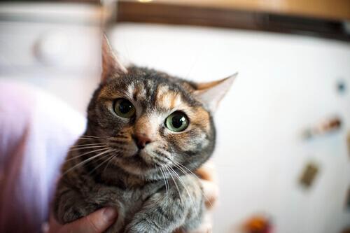 In che modo calmare un gatto nervoso?