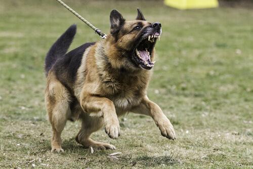 cane aggressivo che tira al guinzaglio
