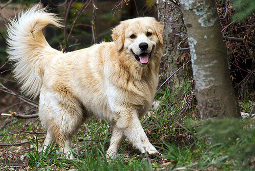 Come trattare le infezioni urinarie nel cane
