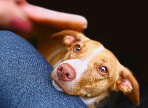 cane che appoggia la testa sulla gamba del padrone