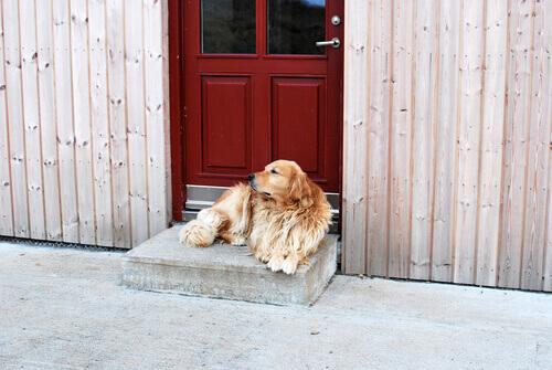 cane seduto davanti ad una porta rossa