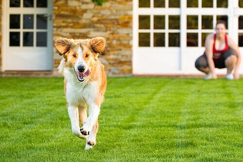 Come insegnare al cane a non scappare di casa