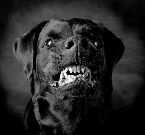 Cani violenti: un problema di istinto o di educazione?