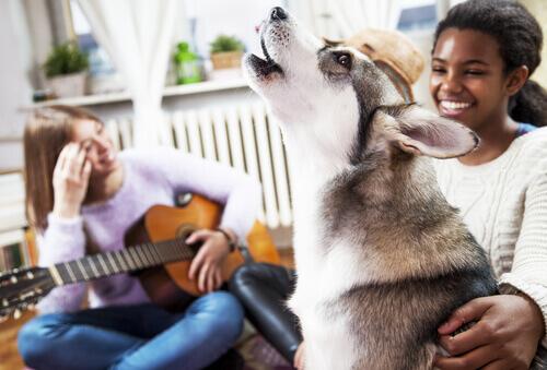 Ai cani piace la musica?
