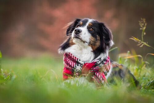 Cani e inverno: preoccupazioni e cure speciali