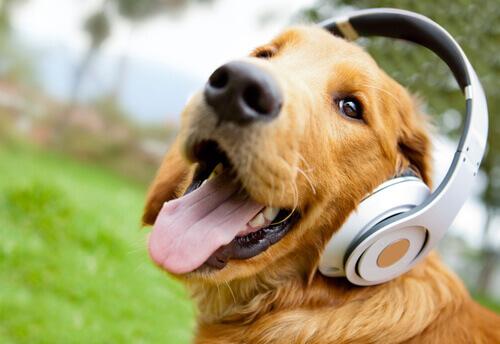 cane con cuffie per la musica