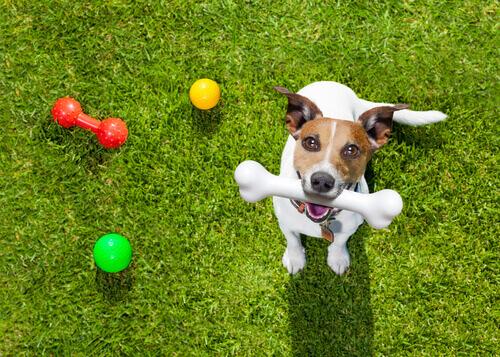 cane con giochi nel prato