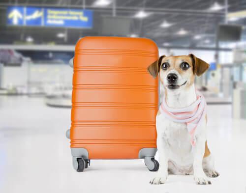 cane con valigia arancione