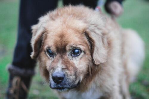 5 consigli per prendersi cura di un cane cieco
