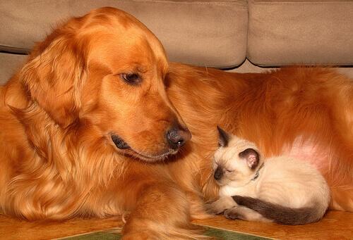 Cure per il benessere del proprio animale domestico