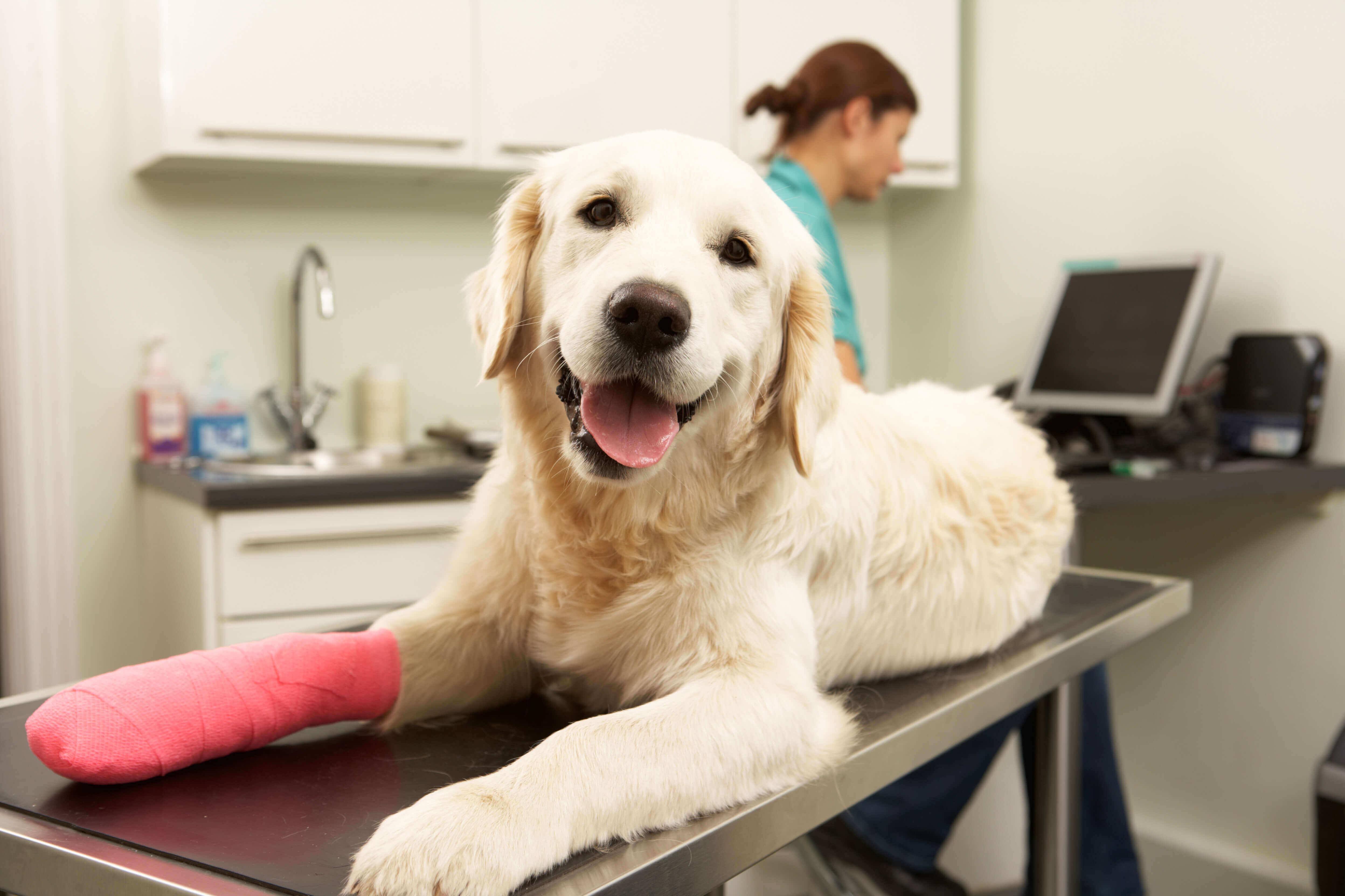 Manie e disturbi compulsivi nei cani