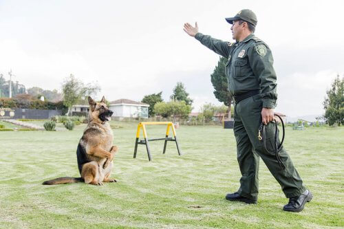 cane poliziotto che viene addestrato