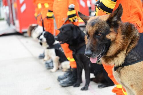 cani da soccorso con addestratori