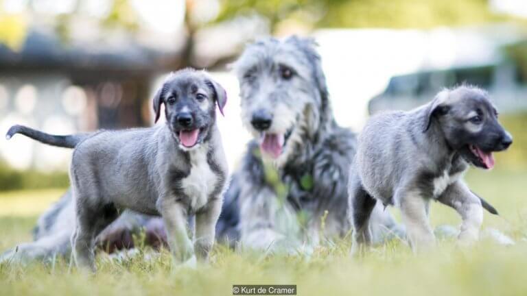 Cani gemelli con madre sul prato