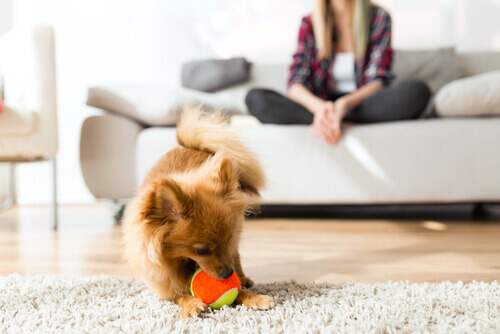 Aspetti fondamentali del comportamento canino