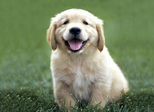 Consigli per migliorare l'odore del cane