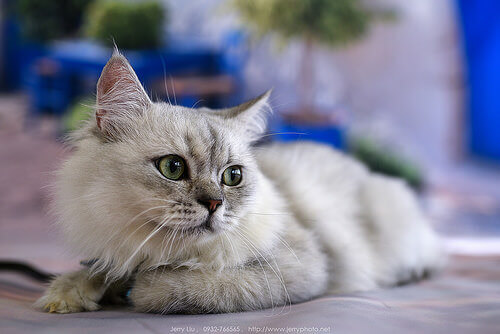 Alcune curiosità sulle zampe dei gatti