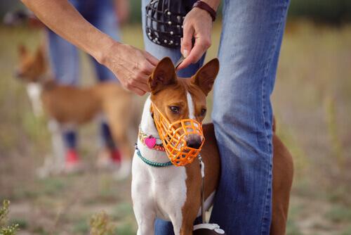Ecco i diversi tipi di museruola per cani