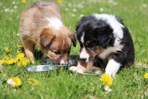 due cagnolini che mangiano sul prato