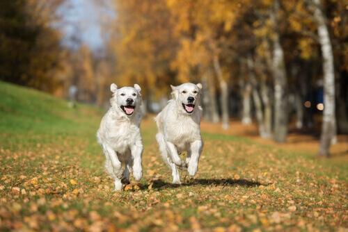 Animali e amore: anche i cani possono innamorarsi?