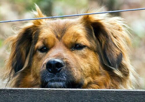 Epatite canina: cause, sintomi e trattamento