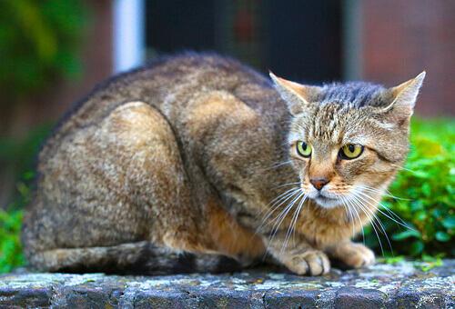 Le diverse personalità del gatto