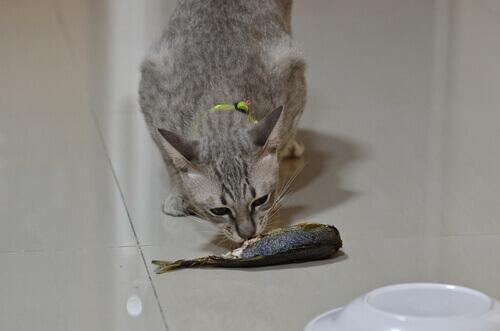 Cani e gatti possono mangiare pesce?