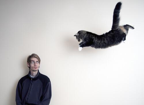 gatto che cade osservato dal padrone