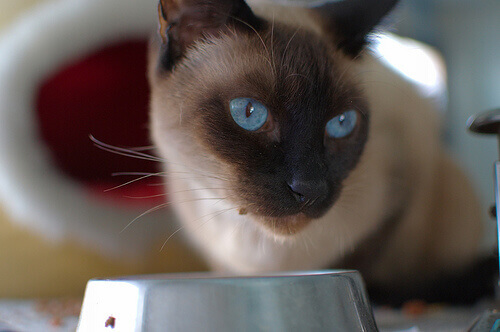Le migliori ricette casalinghe per gatti