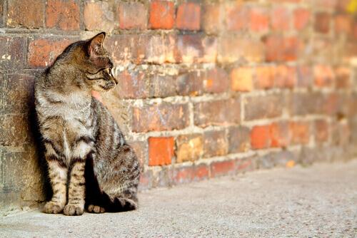 gatto randagio appoggiato al muro