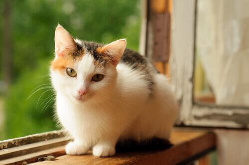 gatto sul davanzale della finestra