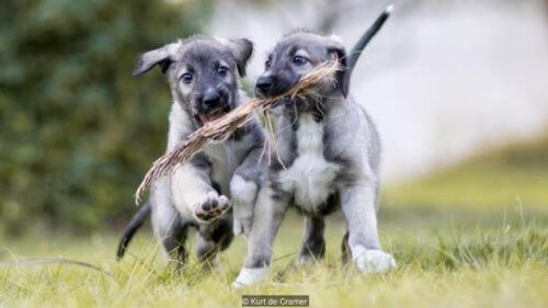 Scoprite i primi cani gemelli identici