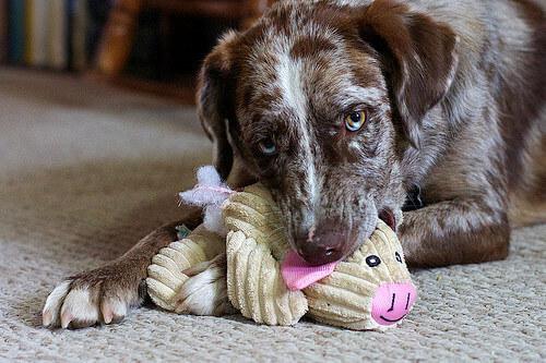 I modi in cui giocare con il vostro cucciolo di cane