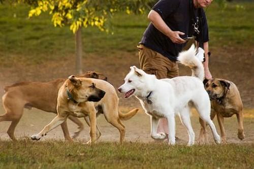 Giochi per cani alternativi a lanciare la pallina