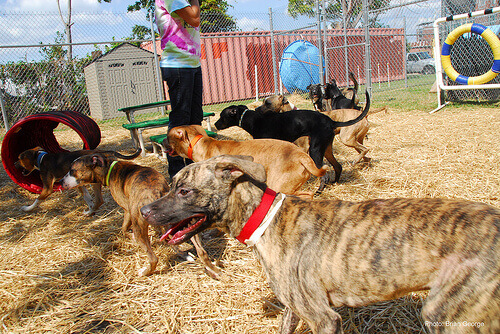 cani addestrati per la ricerca di persone
