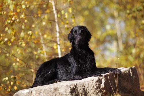 I cani e la stregoneria: un ripasso storico