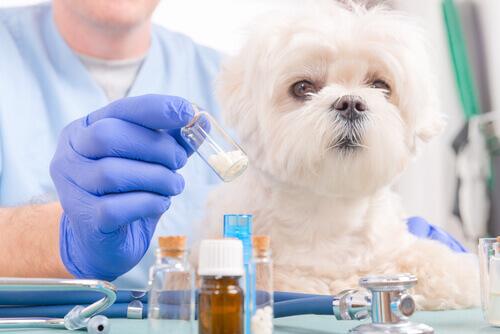 Ibuprofene e cani: un binomio da evitare