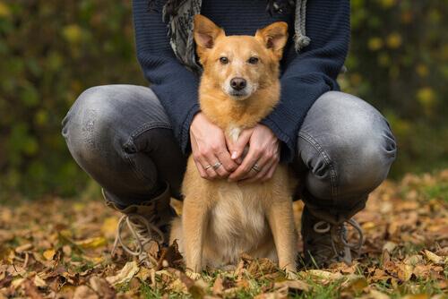 Insufficienza cardiaca nei cani: di cosa si tratta?